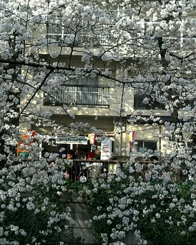 春のお散歩・第一弾